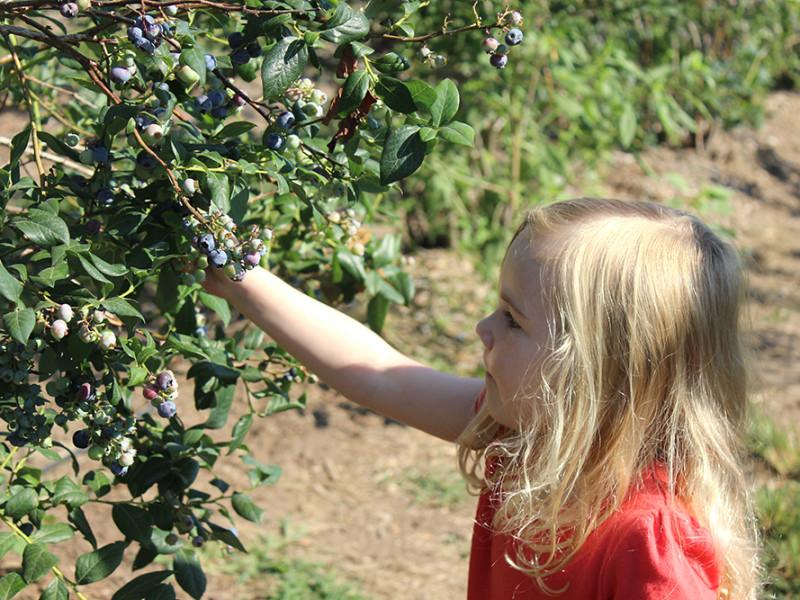 ellie-berries
