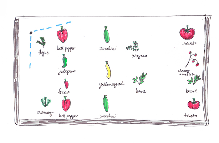 easy vegetable garden plan for beginners